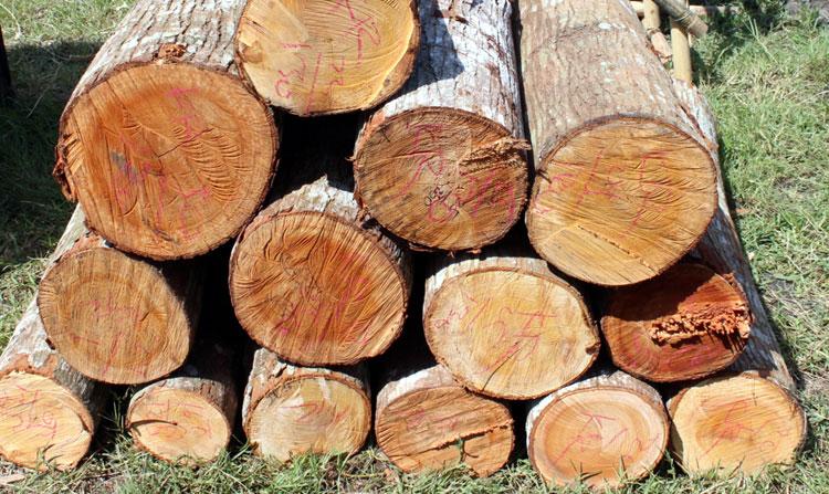Ilustrasi Foto : http://www.bebeja.com/wp-content/uploads/2012/04/pohon.jpg