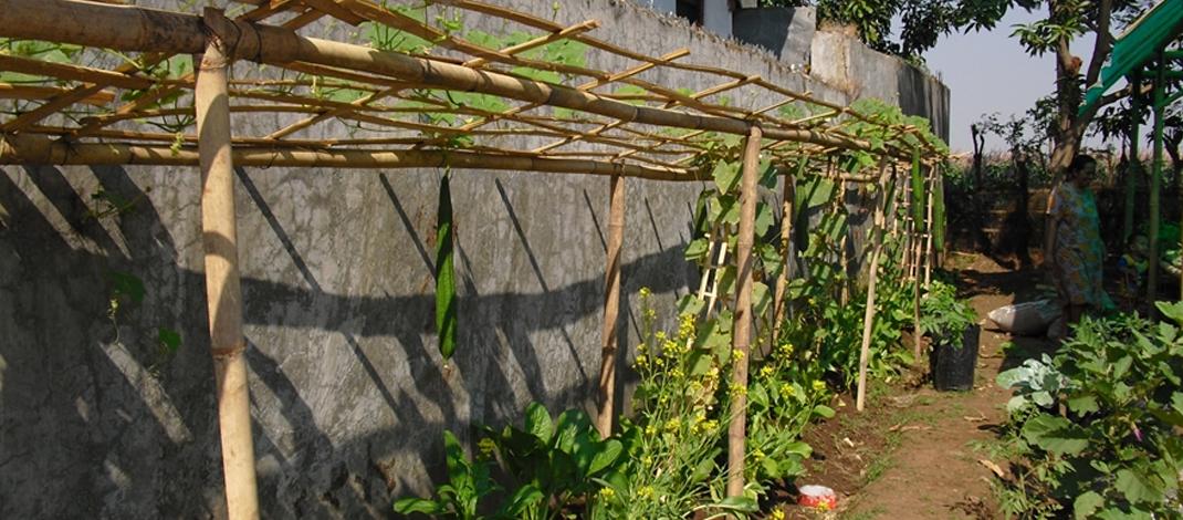 Pemanfaatan lahan sempit pekarangan rumah untuk berkebun. (foto : Darojat)