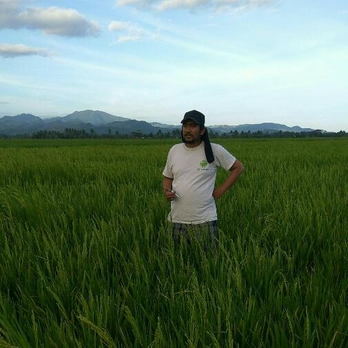 Uji Coba Pengembangan Pertanian Alami di Pinrang